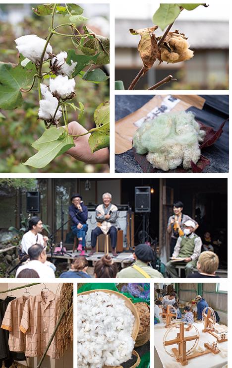 365_cotton.png