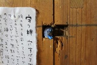 07_anasuberidama.JPG