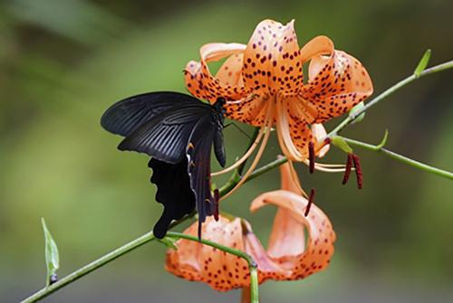 hyogoflower1.jpg
